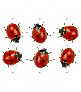 sticker-coccinelles-printemps-ete-provence-insecte-animaux-vitrophanie-electrostatique-sans-colle-decoration-st-patrick-DECO-VITRES-COCC3