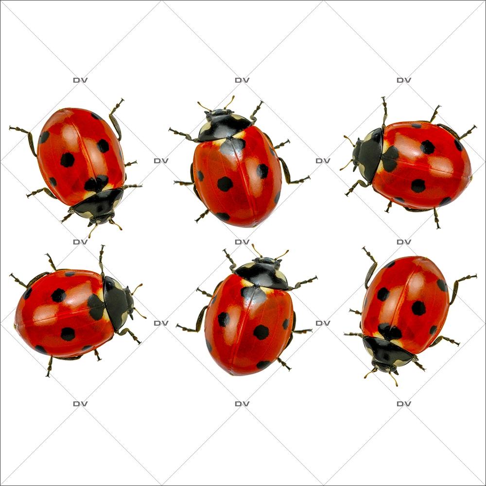 sticker-coccinelles-printemps-ete-provence-insecte-animaux-vitrophanie-electrostatique-sans-colle-decoration-st-patrick-DECO-VITRES-COCC3