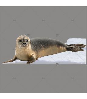 sticker-phoque-banquise-arctique-polaire-vitrophanie-vitrine-noel-electrostatique-sans-colle-DECO-VITRES-BQPHG1