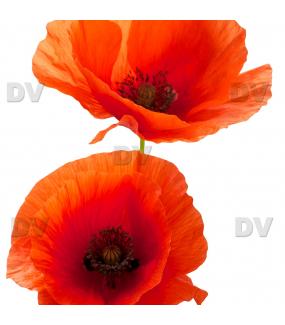 Sticker-2-coquelicots-provence-fleurs-été-vitrophanie-décoration-vitrine-estivale-électrostatique-sans-colle-repositionnable-réutilisable-DECO-VITRES
